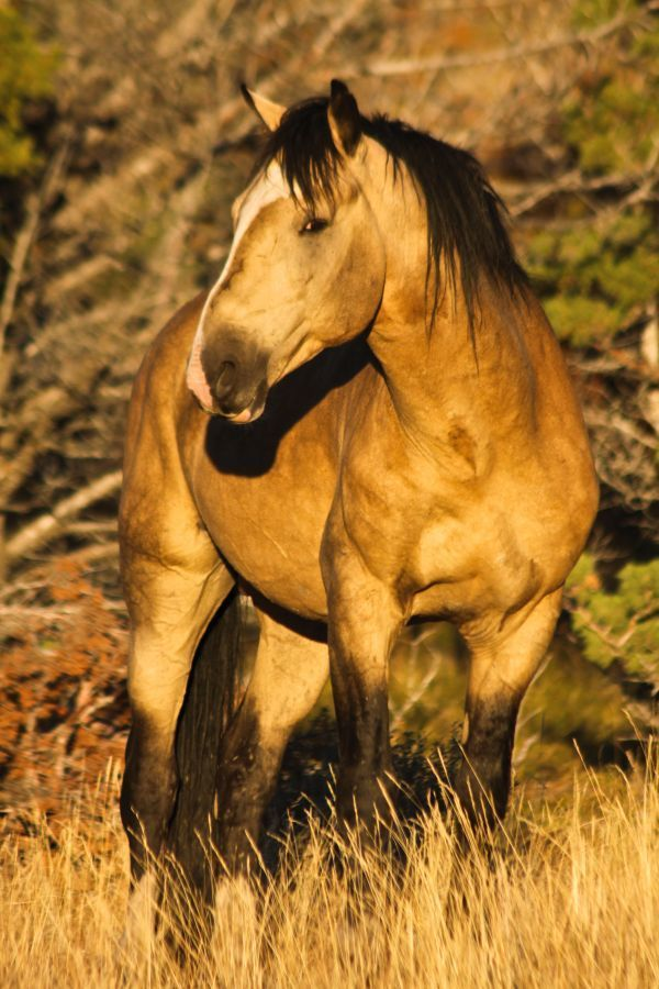 The Wild Mustangs of Oregon's Steens Mountains