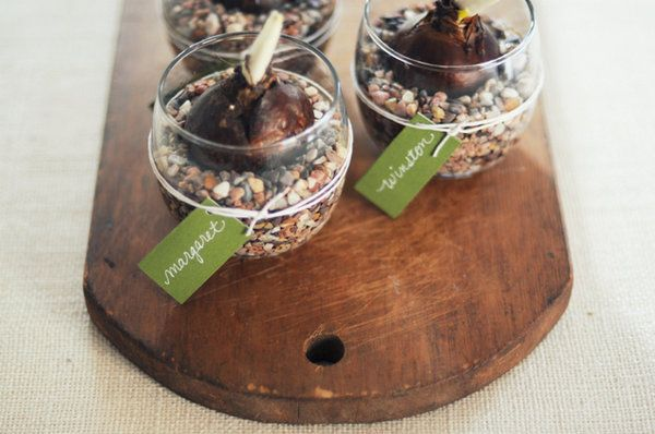 Photos By: Mary Swenson  	Paperwhite bulbs are super easy to grow, and produce tall, upright green stems topped with petite, white flowers. Nestled in a bed of pretty pebbles inside a mini vessel, ready to get growing, these bulbs can also be a sophisticated, rustic wedding favor. Here's how to put them together!  	   	  	   	Materials & Supplies:  	Paperwhite bulbs are just the right size to fit inside inexpensive glass votive holders. Small pebbles (availabl...