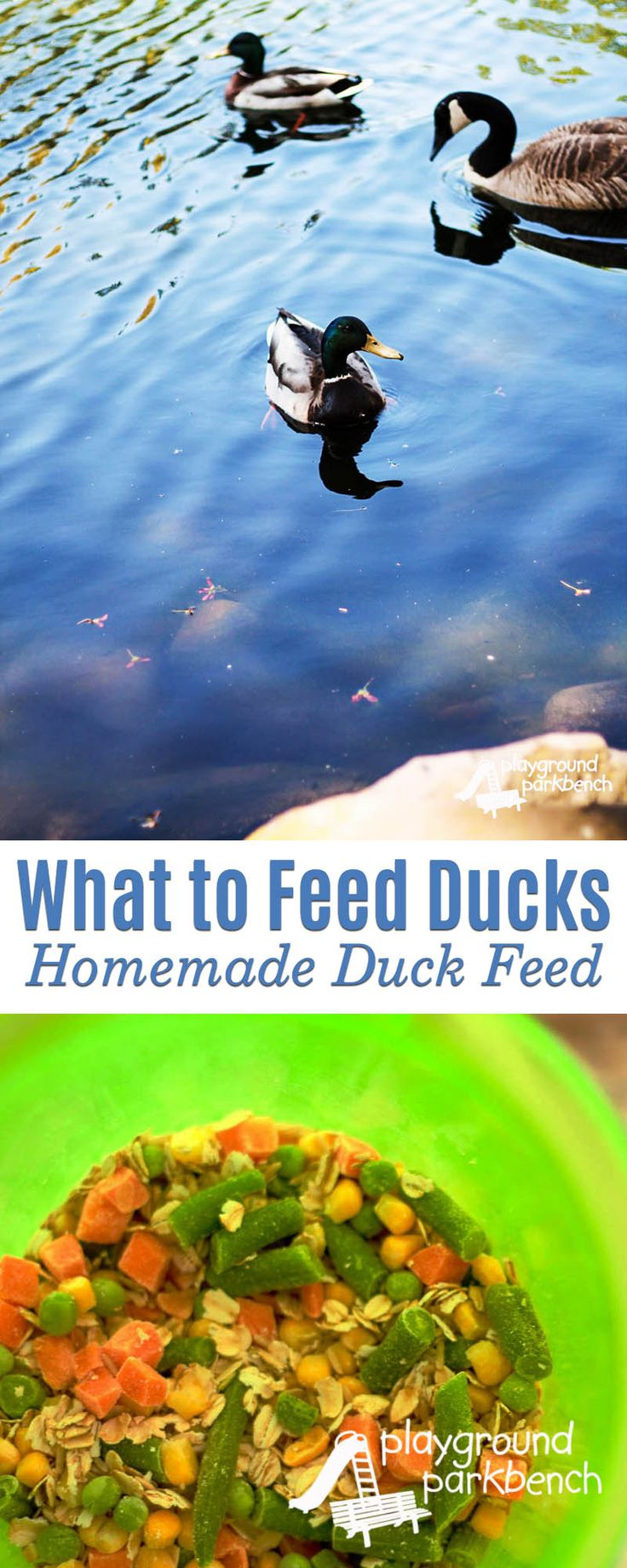 For generations, children have been reading Make Way for Ducklings, inspiring countless trips to the local pond to feed and visit the ducks.  What most don't know is that bread and crackers are the worst food to feed these birds.  Learn why and what you should feed ducks, along with a healthy homemade duck feed recipe | Ducks | Children's Books | Robert McClosky | Preschool |
