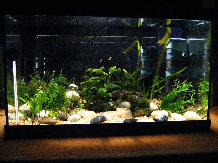 Guía para el principiante en acuarios de agua dulce (pimera parte)