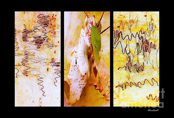 Scibbly Gum Tree Bark Triptych Australian Tree Bark Series by Lexa Harpell. A collection of Aussie tree bark images. Taken from my travels around Australia. Add a splash of COLOUR and UNIQUE LOOK! Visit my photo gallery and get a beautiful Fine Art Print, Canvas Print, Metal or Acrylic Print OR Home Decor products. 30 days money back guarantee on every purchase so don't hesitate to add some AUSTRALIAN INTIMACY in your home.