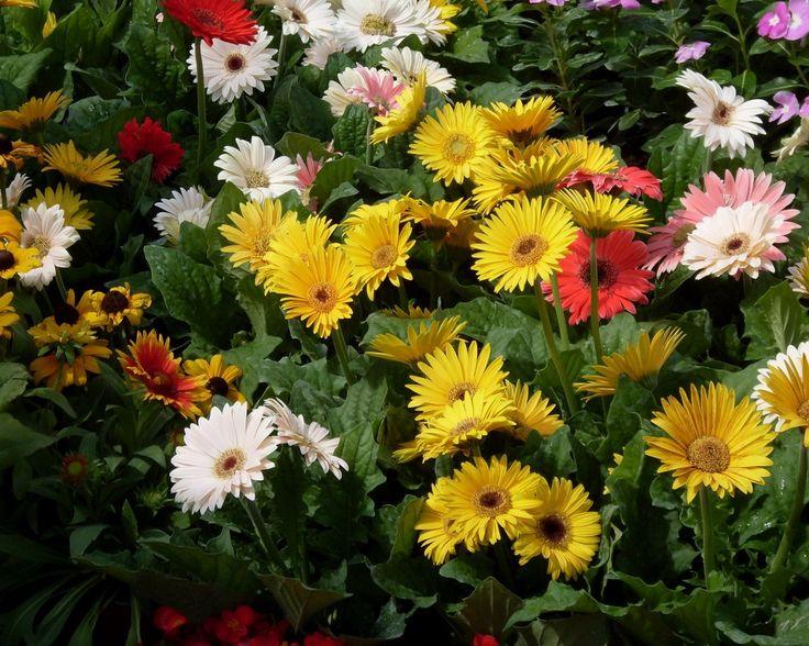 sobre Jardins Botânicos no Pinterest  Seattle, Museus e Jerusalém