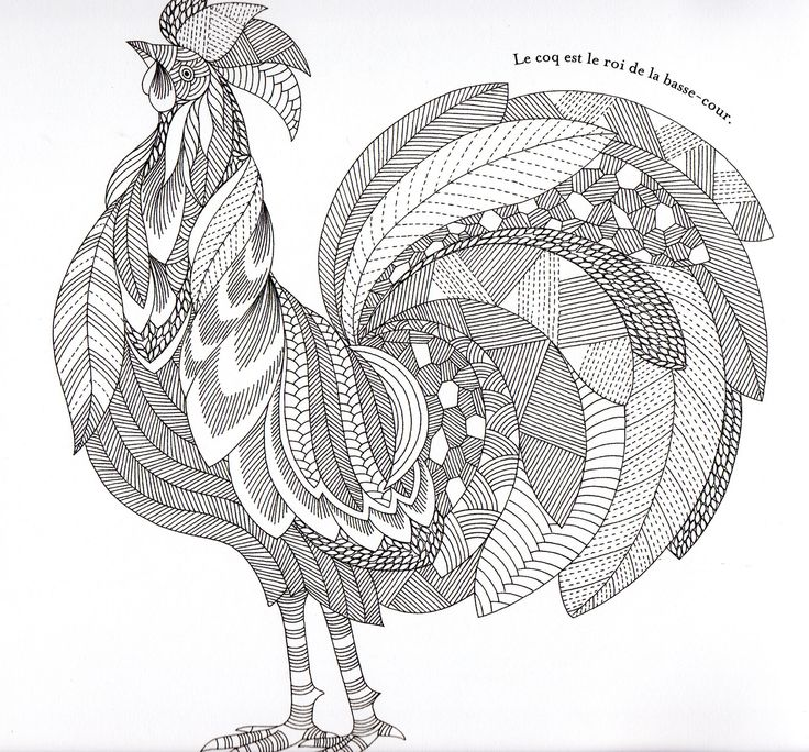 Coloring Pages For Adults Rooster : Animaux fantastiques rooster abstract doodle zentangle