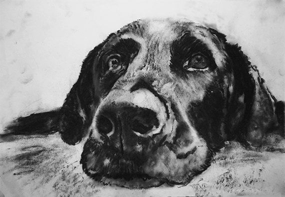 Labrador Dog charcoal drawing giclee print by OjsDogPaintings #dogs #art #charcoal #labrador #blacklab
