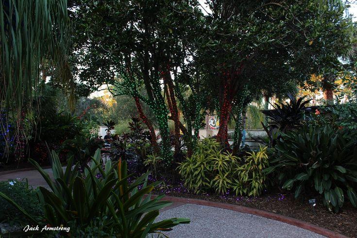 49 best florida botanical gardens images on pinterest - Florida botanical gardens christmas lights ...