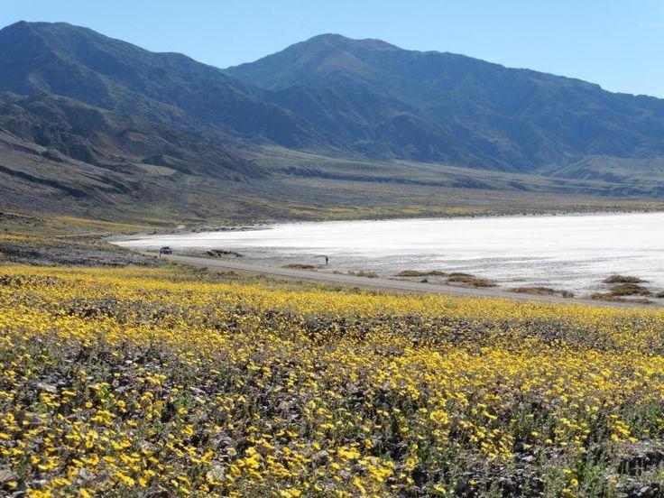 wildflowers meet the salt flats
