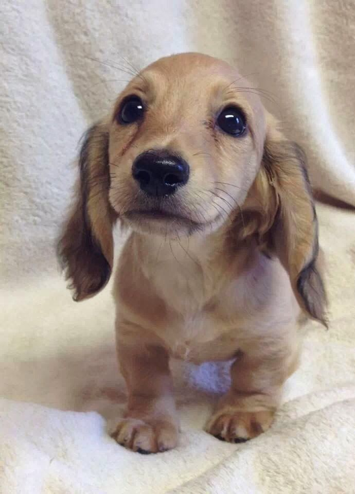 Obedience Training Tips For Puppies - Comprehensive list of helpful information from BarmyPets: well worth reading
