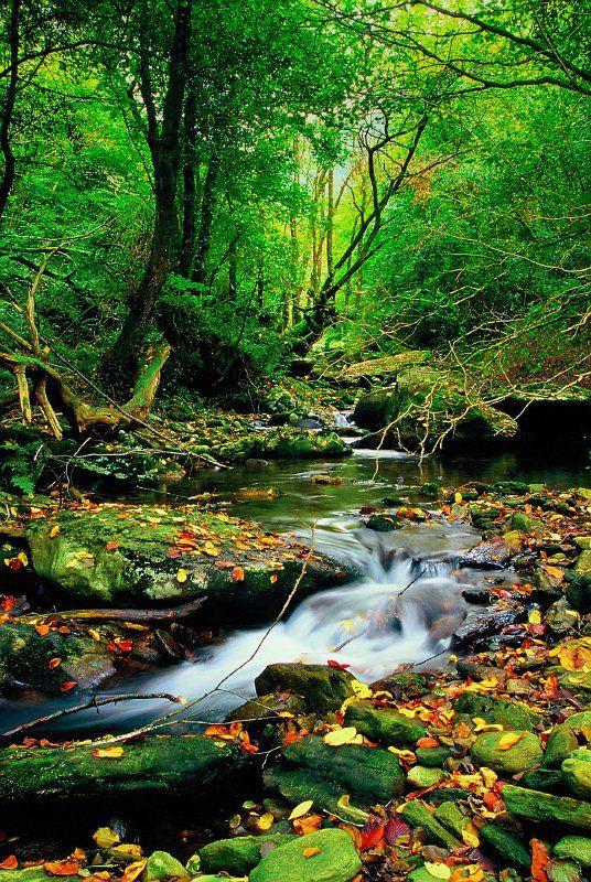26 best Bosque atlántico images on Pinterest | Bosques, Brasil y De ...