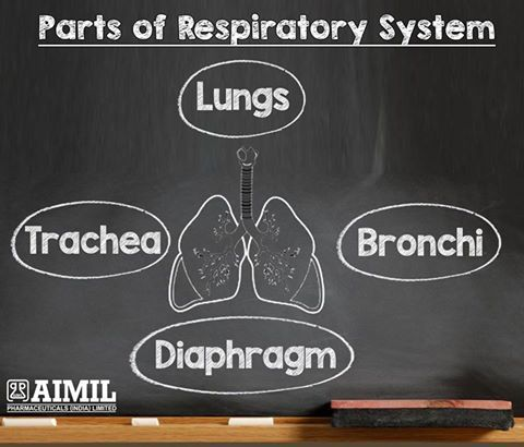 Parts of the Respiratory System.  The #HumanRespiratorySystem Consists Of The #Lungs, #Bronchi and #Diaphragm and #Trachea #RespiratoryDisease #ColdAndCough