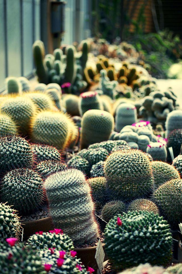 cacti <3