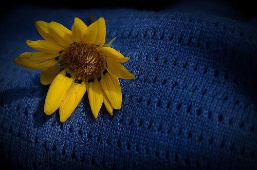 a memory | Flickr - Photo Sharing!