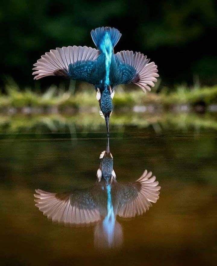 Pin By Sneha On Photography Birds Animals Beautiful Birds