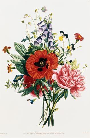 Jean Louis Prevost, Bouquet di digitale, papavero e peonie