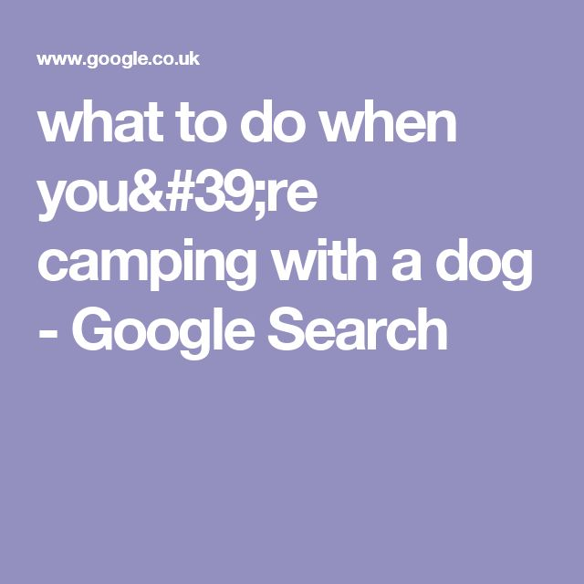 what to do when you're camping with a dog - Google Search