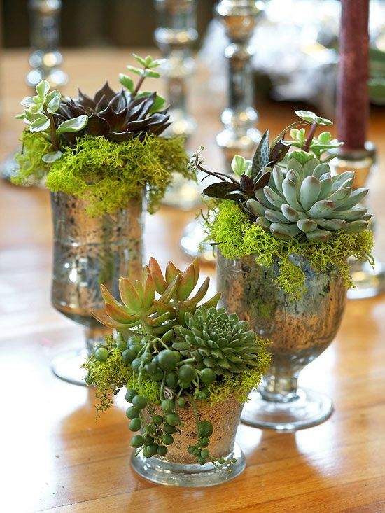 Glitzy Old Glasses: If your old, decorative glasses aren't holding water anymore, have them hold plants such as drooping string of pearls, reindeer moss, and miniature succulents.