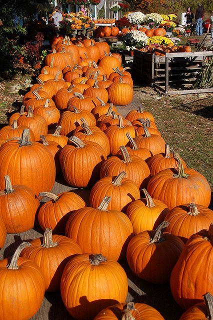 Farm stand display.....: Pumpkin Display, October Pumpkin, Pumpkin Patches, Pumpkin Stands, Photo, Stands Pumpkin, Pumpkins ️