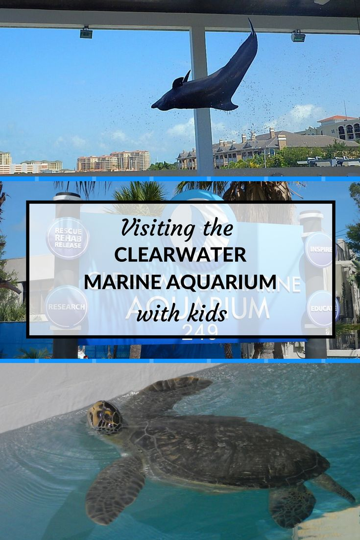 25 Best Ideas About Dolphin Tale On Pinterest Dolphin