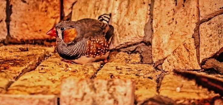Zebra Finch by Стас Киренков on 500px