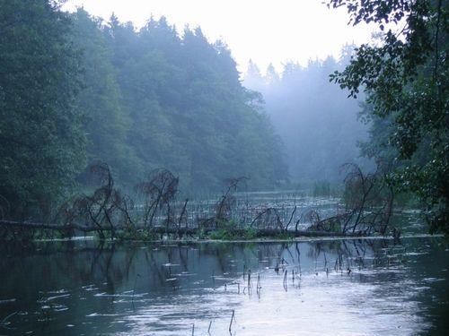 The Czarna Hańcza, Čornaja Hanča - the largest river of the Suwałki Region of north-eastern Poland