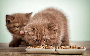Net zoals dat je goed voor jezelf zorgt en alleen het beste goed genoeg is, wil je ook alleen maar het beste voor je huisdier. En als kattenliefhebber besteed je dus ook graag wat extra aandacht aan wat je jouw favoriete viervoeter voorschotelt om je kat in optimale gezondheid te houden. Ontdek de tips van je online apotheker voor het juiste voer voor jouw kat.