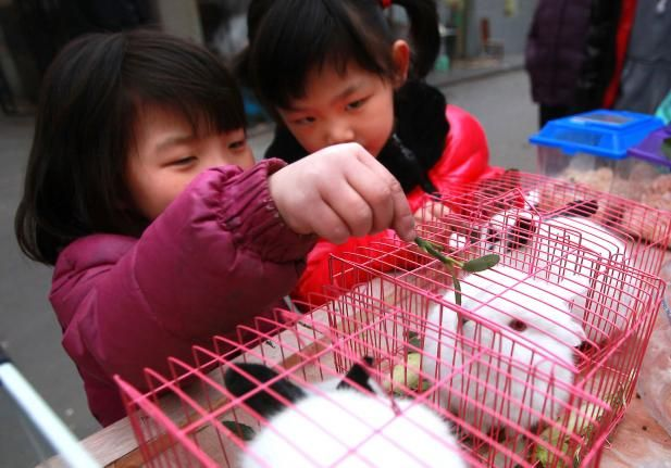 Young Chinese girls feed pet rabbits for sale at a makeshift, sidewalk pet store in Beijing on February 25, 2014. UPI/Stephen Shaver  Read more: http://www.upi.com/News_Photos/Features/Street-animals-of-China/fp/6553/#ixzz3JcKbvZrD