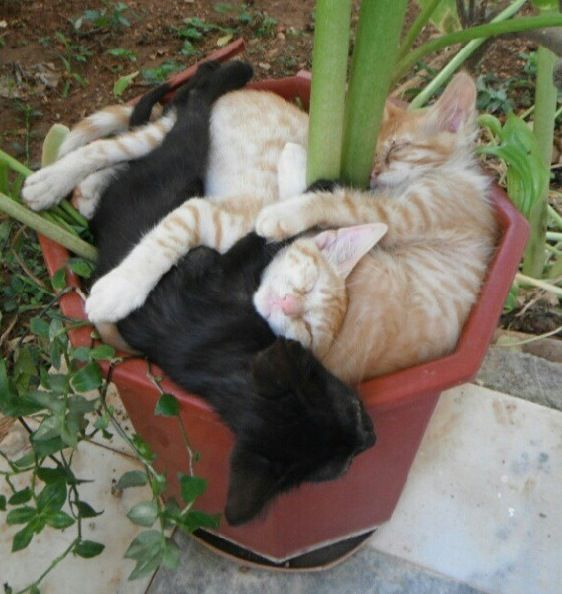 Potted cats...just a little crowded!