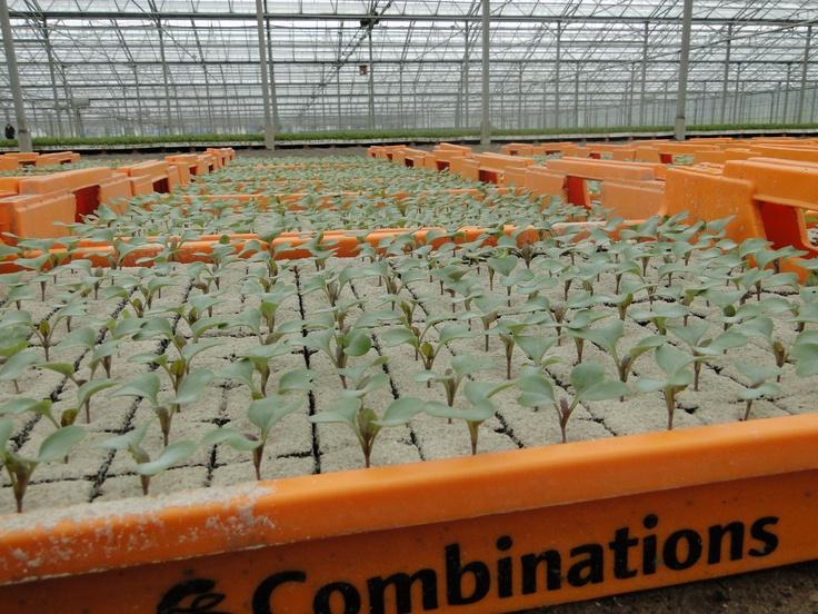 Spruitenplantjes van Combinations