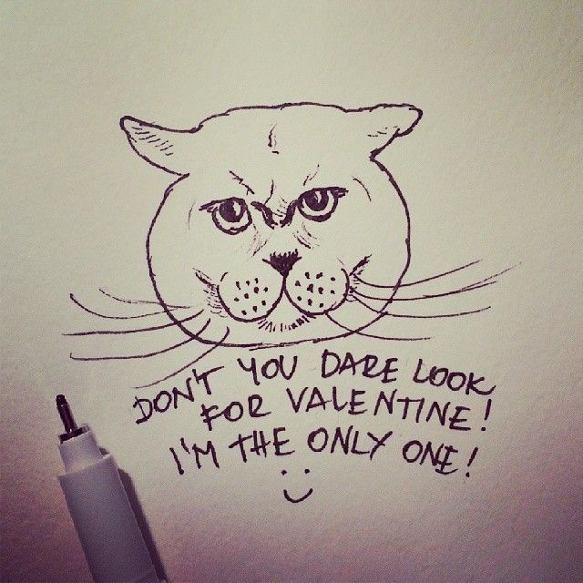 Hilton The Cat :) #valentine #cats #weeklyfluff #meow #jj_justcats #neko #gato #mańki #koty #catstagram #instacat #instagood #caturday #ilovemycat #love