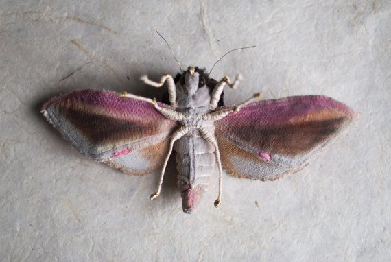P Moth Decorator 249 best bugs images o...