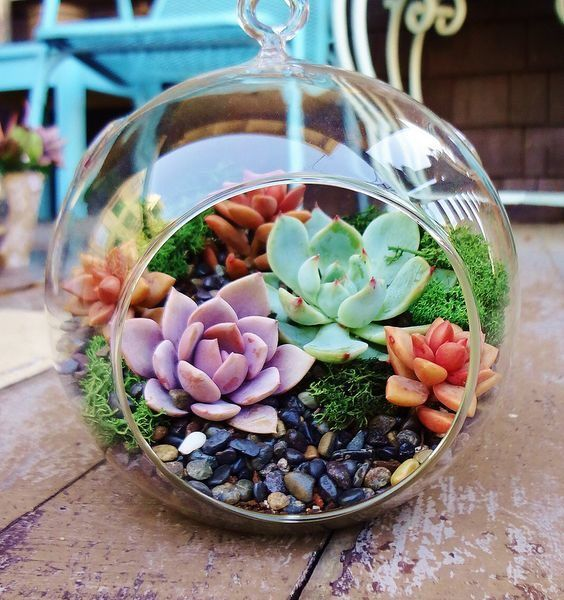 15 Most Creative Terrarium ideas for Home Decoration