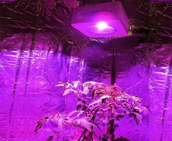 100% Yeild Led Cob Grow Light 200w Full Spectrum Hydroponic Grow Lamp for Garden Greenhouse Indoor Plant Veg Grow & Commercial Plant Grow Online with $160 /Piece on Houyilighting's Store | DHgate.com  http://www.dhgate.com/product/full-spetrum-led-grow-light-uv-ir-indoor/206464351.html#s1-0-1b;searl|876458523