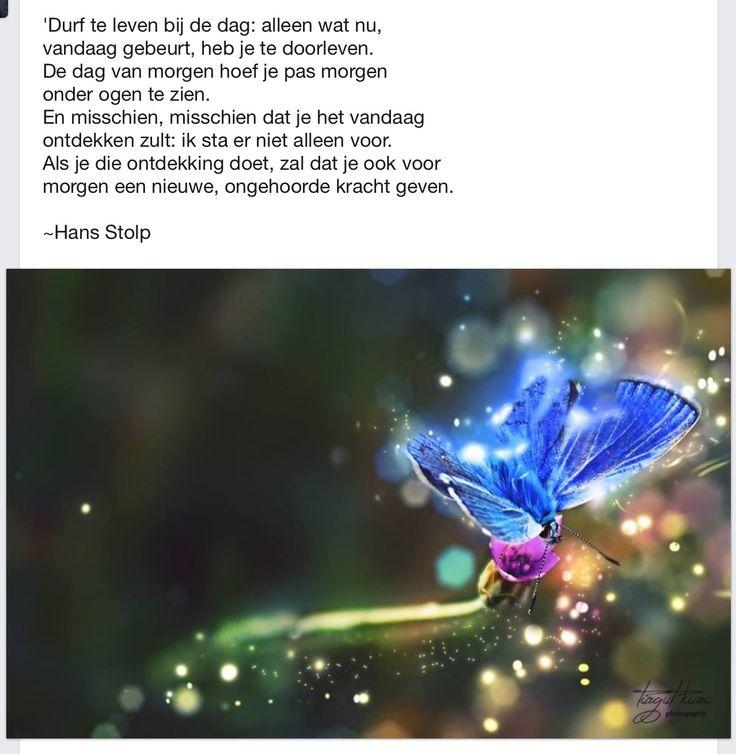 Mooi, van Hans Stolp