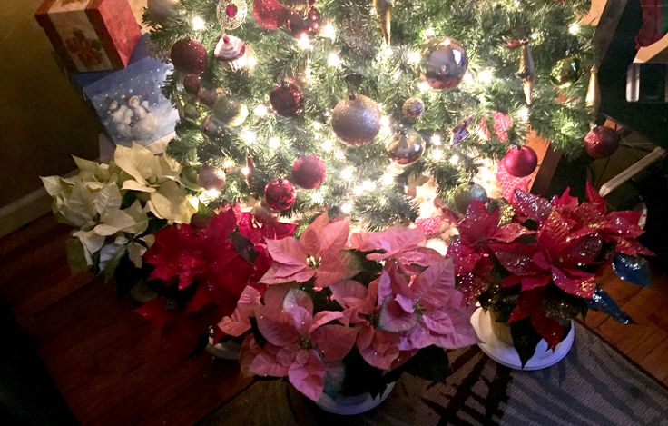 During Christmas time, surround your Christmas tree with Poinsettias (plain and glittered) to give it a fuller look.
