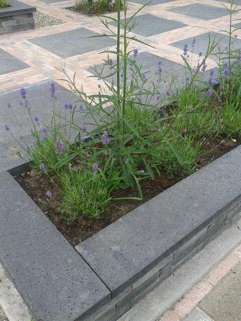 Border voortuin met lavendel
