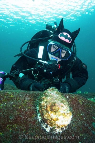 A very active abalone off of Vancouver Island.