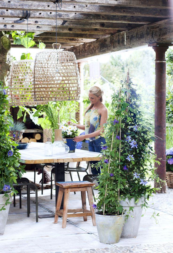 Sfeerbeeld terras - overkapping - hoge planten in potten - passiebloem