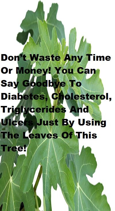 Don't Waste Any Time Or Money! You Can Say Goodbye To Diabetes, Cholesterol, Triglycerides And Ulcers Just By Using The Leaves Of This Tree!