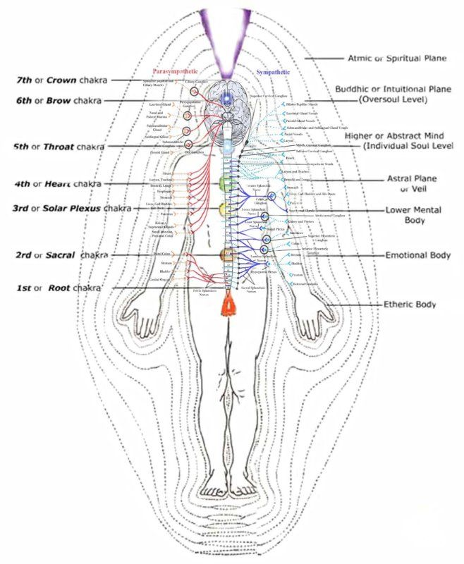 The Re Discovery Of The Human Energy Field Jay Kshatri