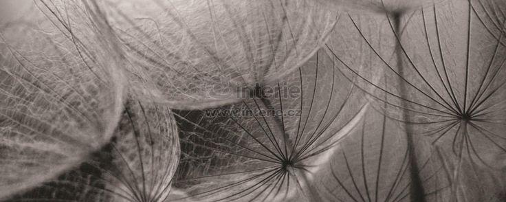 Fototapeta panoramatická vliesová Grey interior of dandelion : Interie