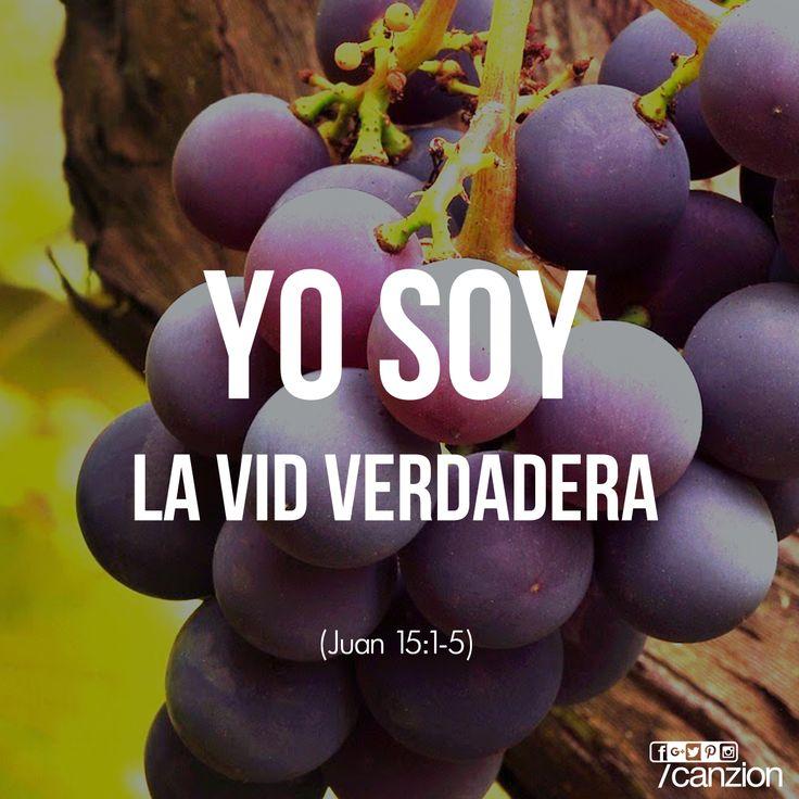 Juan 15:1y5  Yo soy la vid verdadera, y mi Padre es el labrador. Yo soy la vid, vosotros los pámpanos; el que permanece en mí, y yo en él, éste lleva mucho fruto; porque separados de mí nada podéis hacer. ♔