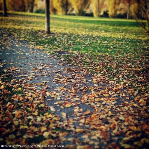 Autumn in the Park Fallen leaves