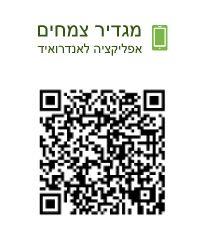 Flowers and wild plants of israel :: Herbal plants