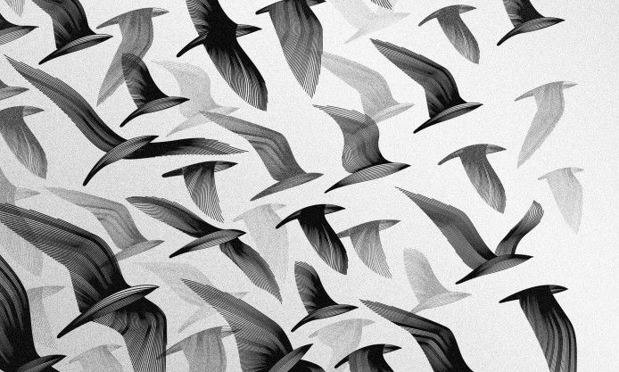 abstraction, birds, flying, texture, swallow, background, black and white