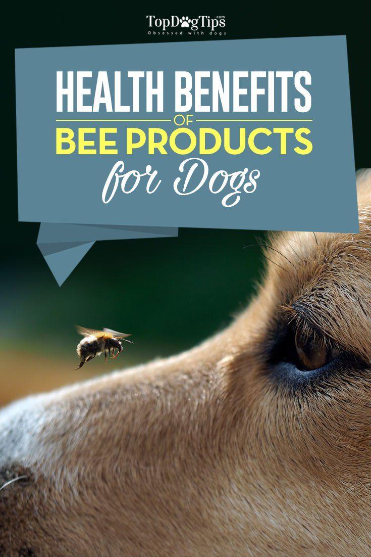 86 best Dog Supplements & Dog Vitamins images on Pinterest | A dog ...