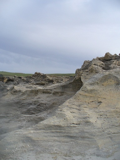 Section of petrified forest, on coast near Portland, Victoria