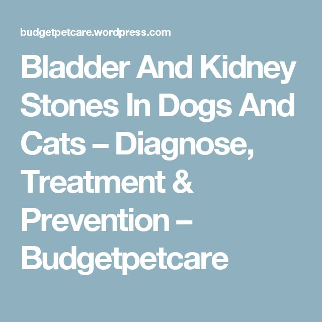 Bladder And Kidney Stones In Dogs And Cats – Diagnose, Treatment & Prevention – Budgetpetcare