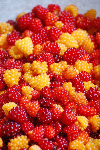 Alaska Salmon Berries~~don't know anything about these, whether they're good or not, but they sure are pretty!
