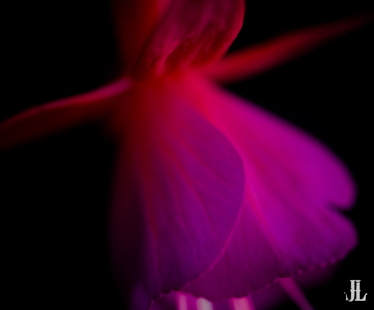 Dancer in the Dark by Jari Lindeman, via 500px