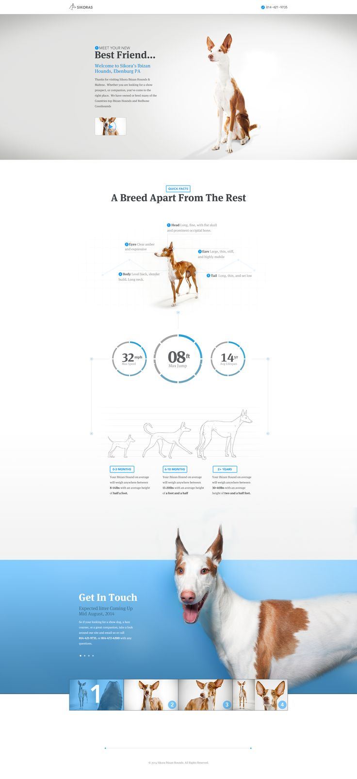 Marketing Experience Challenge - Sikora Ibizan Hounds by Brandon Termini for Handsome