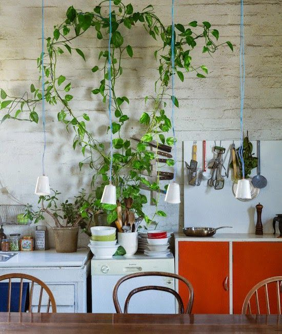Earthy Kitchen       Warm light     Creaping house plants     Rachel's Stunning Kitchen      Al these kitchens are different in style, but...